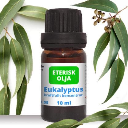 eterisk eukalyptus olja